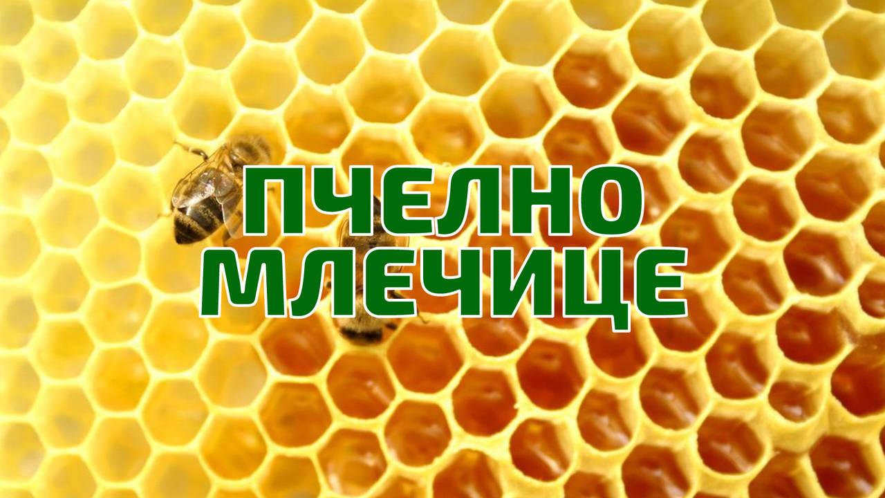 Пчелно млечице дарът на вечността