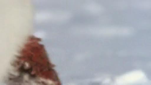 Храненето на Арктическите лисици
