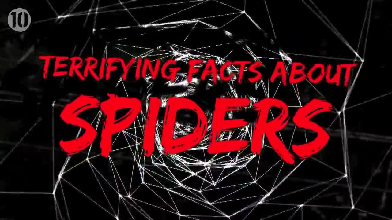 10 ужасяващи факта за паяците