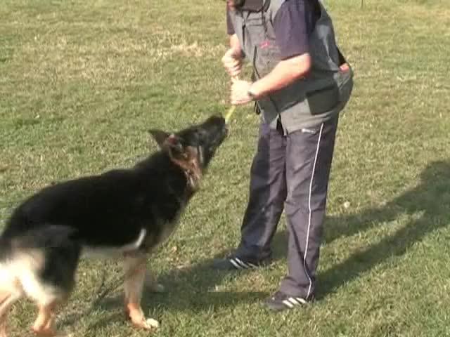 тренировка 2 - Zoro