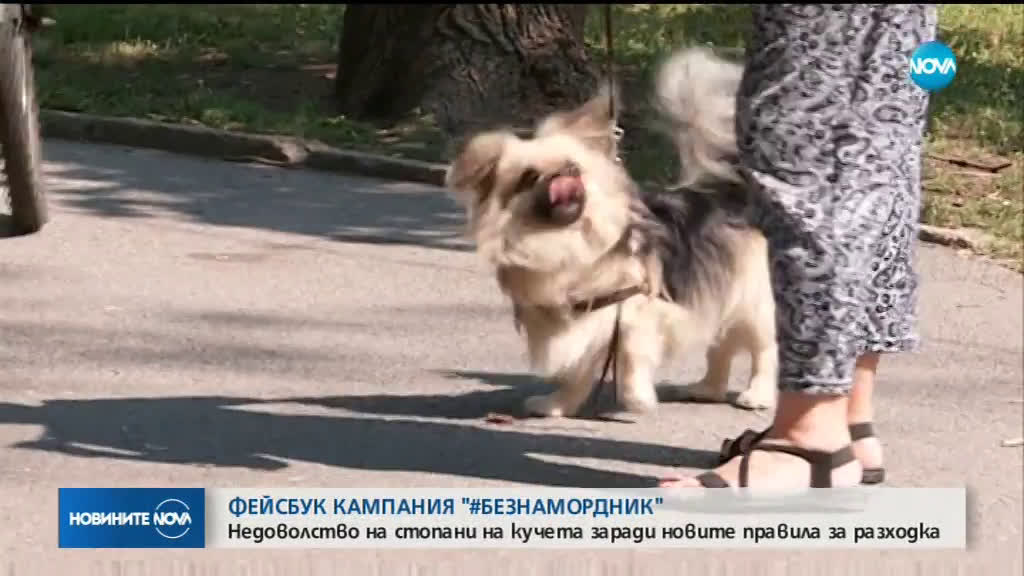 Недоволство на стопани на домашни кучета заради новите правила за разходка