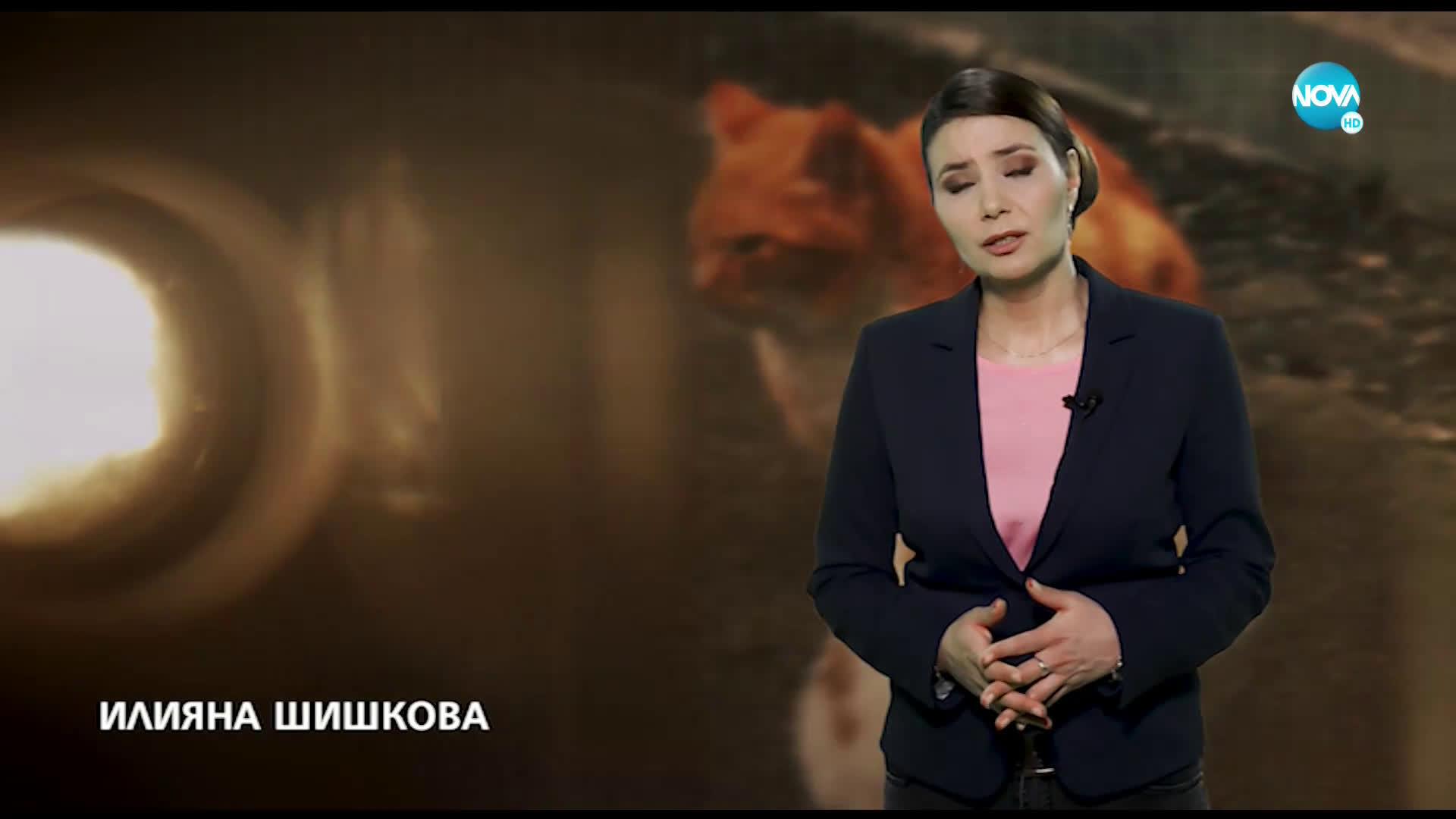 """В ОЧАКВАНЕ НА """"ЗЛАТНИТЕ ГЛОБУСИ"""": Ще стане ли Мария Бакалова първата отличена българка?"""