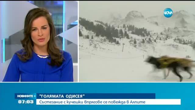 Състезание с кучешки впрягове се повежда в Алпите