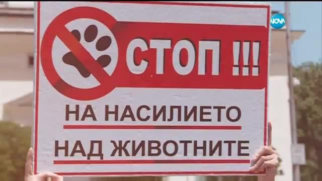 """""""Кървав"""" протест на вегани и вегетарианци за втори път в София"""