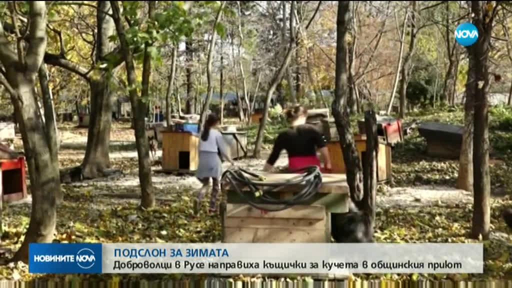 Доброволци изработваха къщички за кучета в Русе