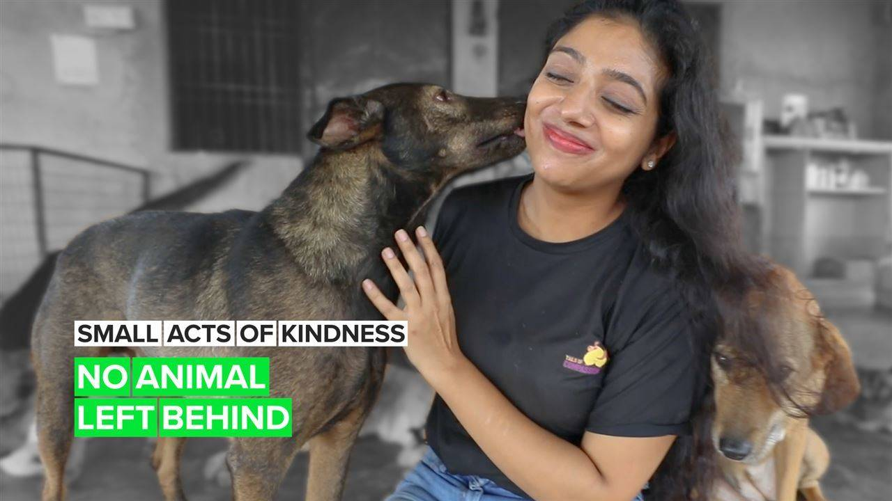 A Small Act of Kindness: The woman saving India's unwanted dogs