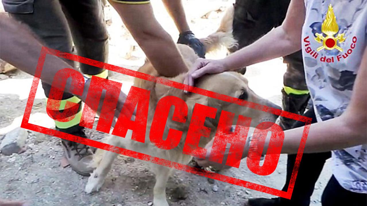 Уникална акция по спасяване на куче
