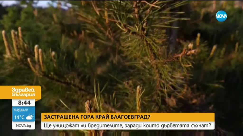 Застрашена ли е гората край Благоевград?