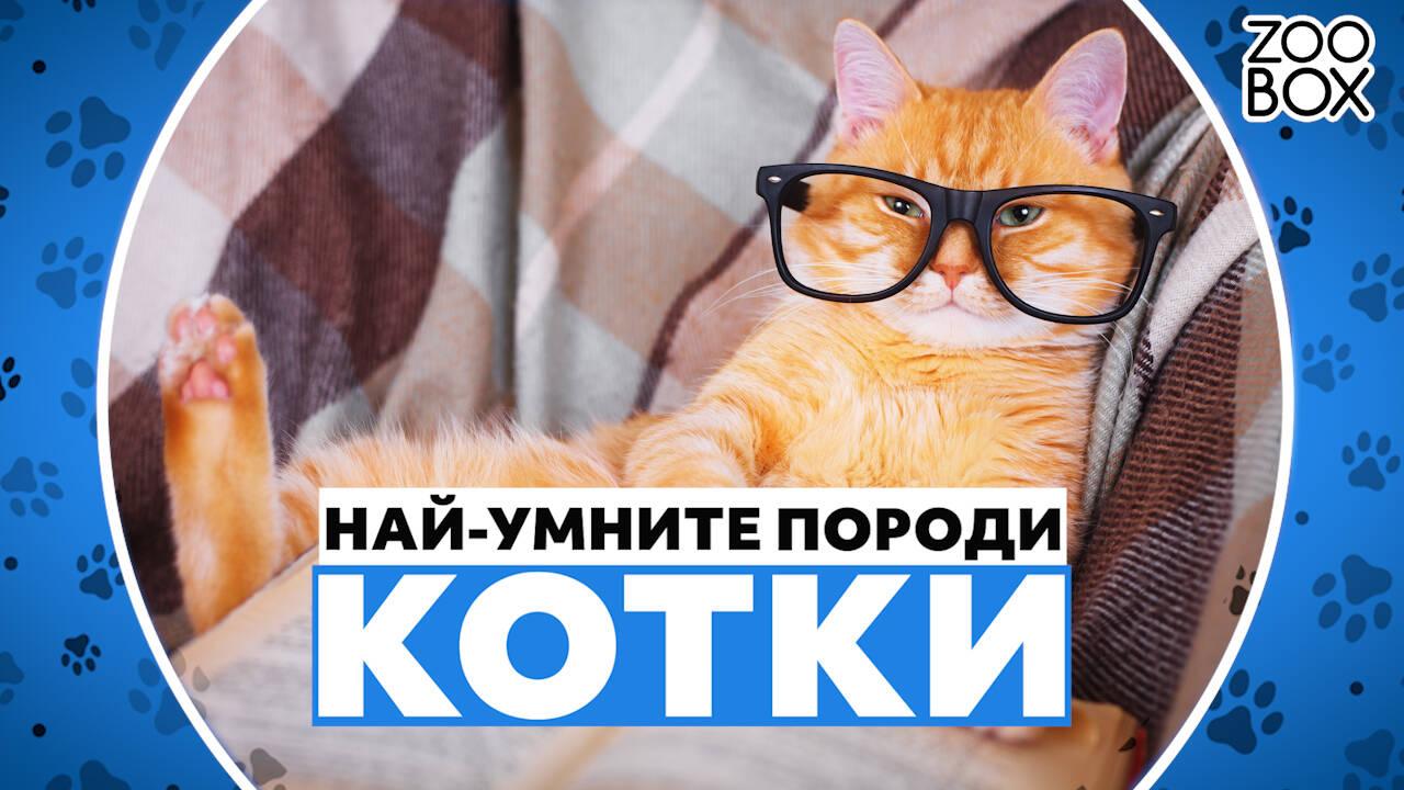 Най-умните породи котки
