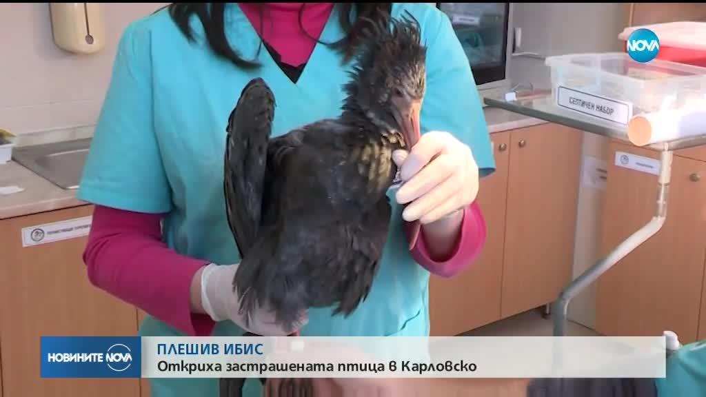 Птица от застрашен вид изненадващо се появи в България