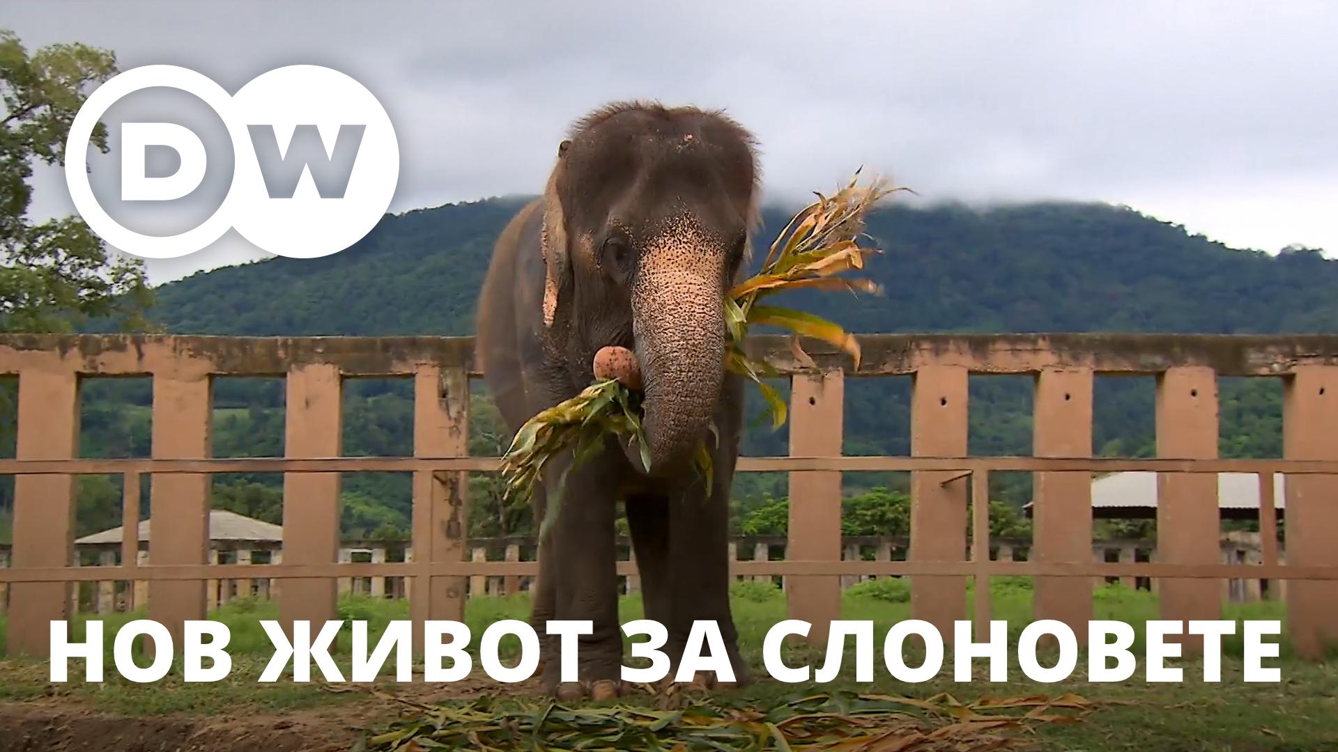 Тайланд - нов живот за работещите слонове