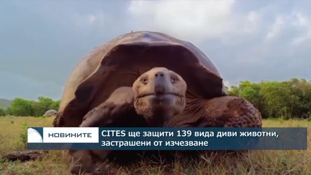 CITES ще защити 139 вида диви животни, застрашени от изчезване
