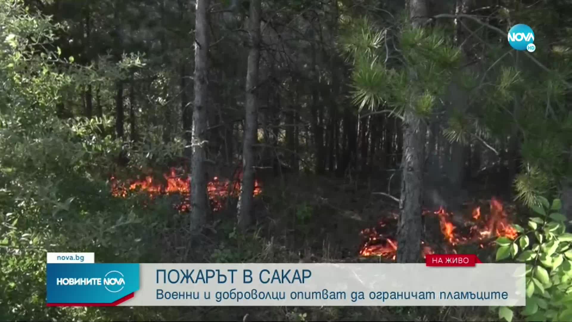 Продължава да гори боровата гора край Свиленград