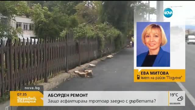 Районен кмет: Асфалтираните дървета е трябвало да се премахнат