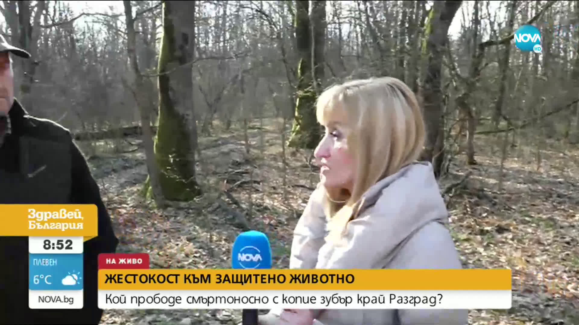 Убиха с копия зубър край Разград, направиха суджуци - България   Vesti.bg