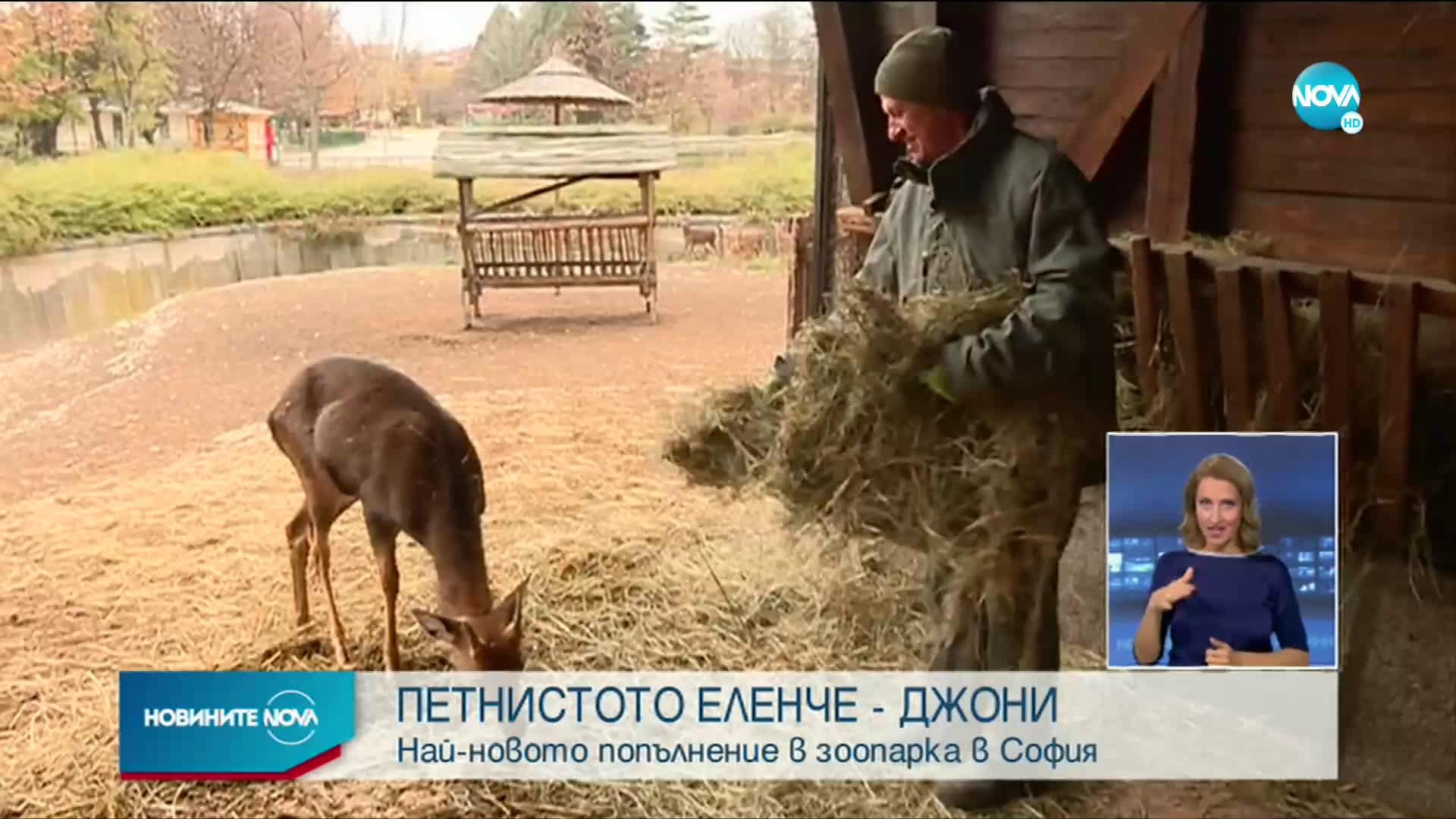 Петнисто еленче - най-новото попълнение в зоопарка в София