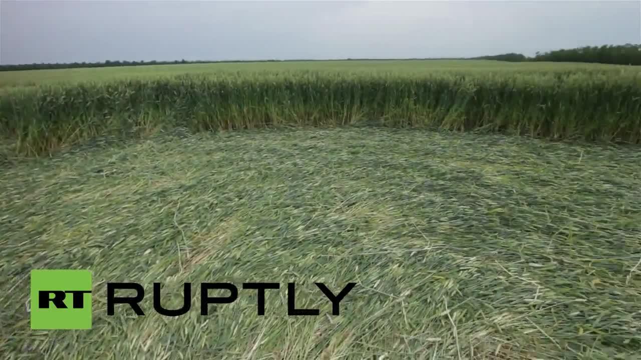 Дрон снима мистериозни кръгове в пшеничена нива в Република Адигея