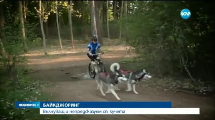 Bikejoring: Вълнуващ и непредсказуем спорт за кучета и велосипедисти