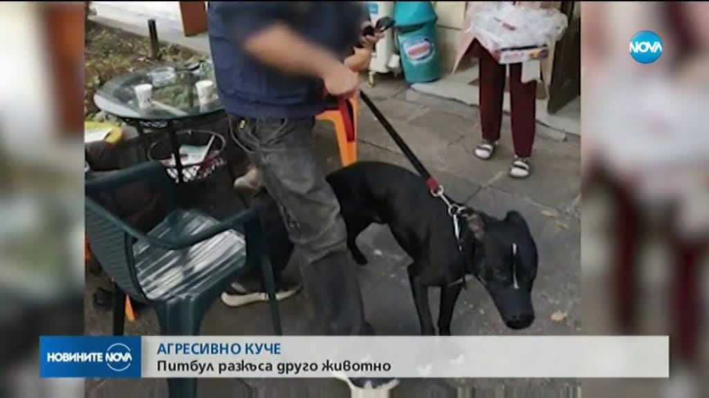 АГРЕСИВНО КУЧЕ: Питбул разкъса пинчер в столичен квартал