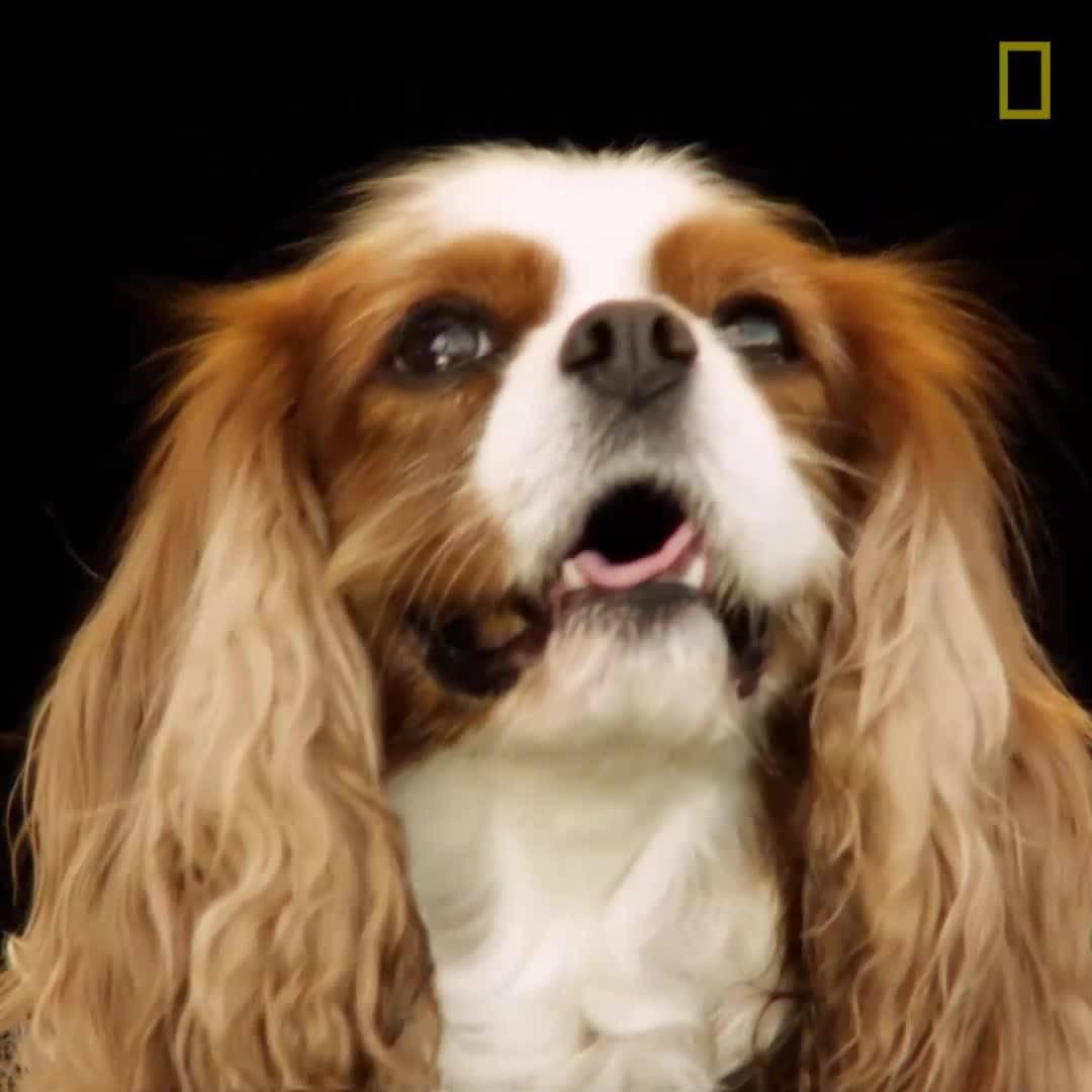 Световен ден на кучето