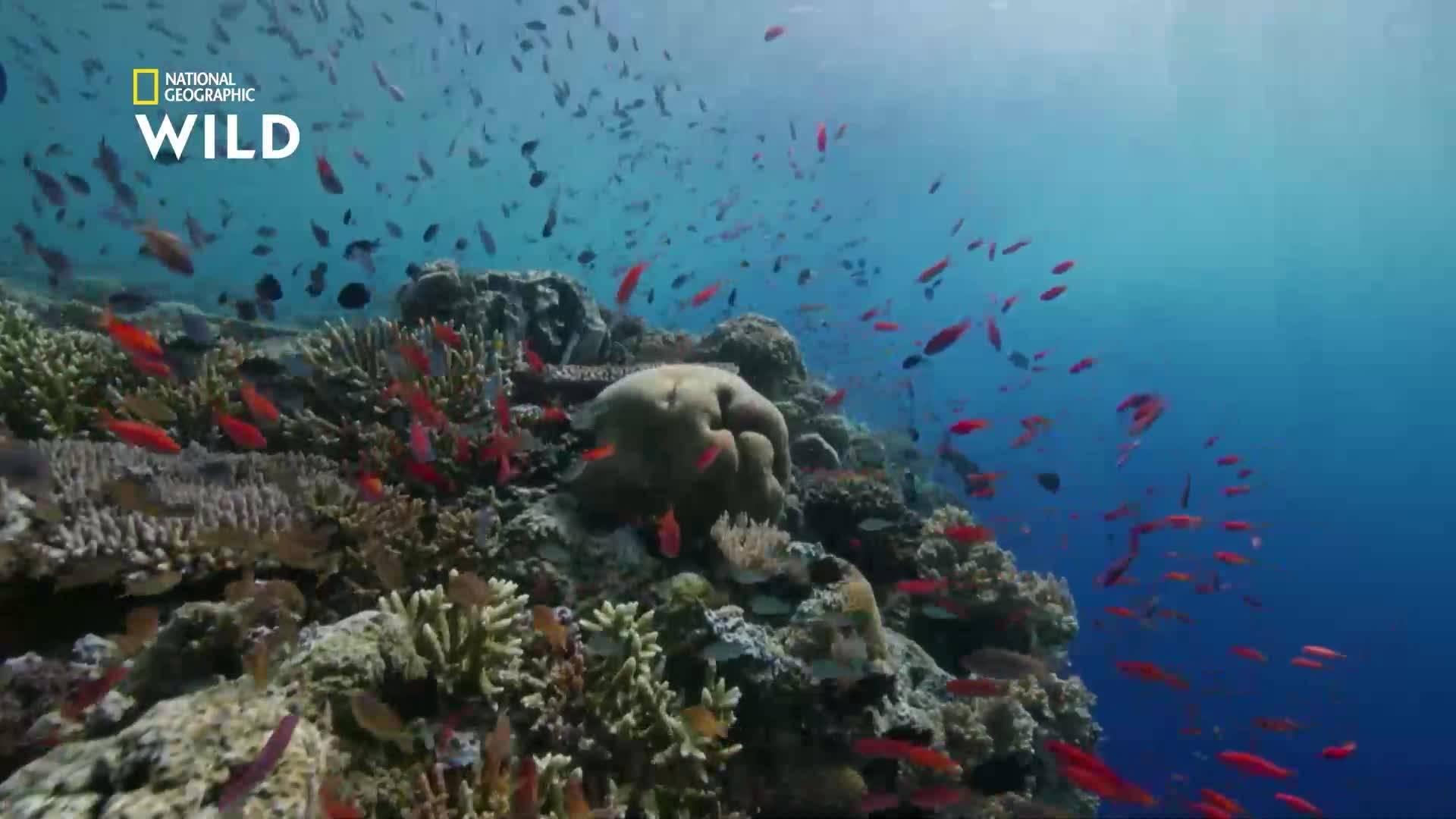 Защо загивaт кораловите рифове