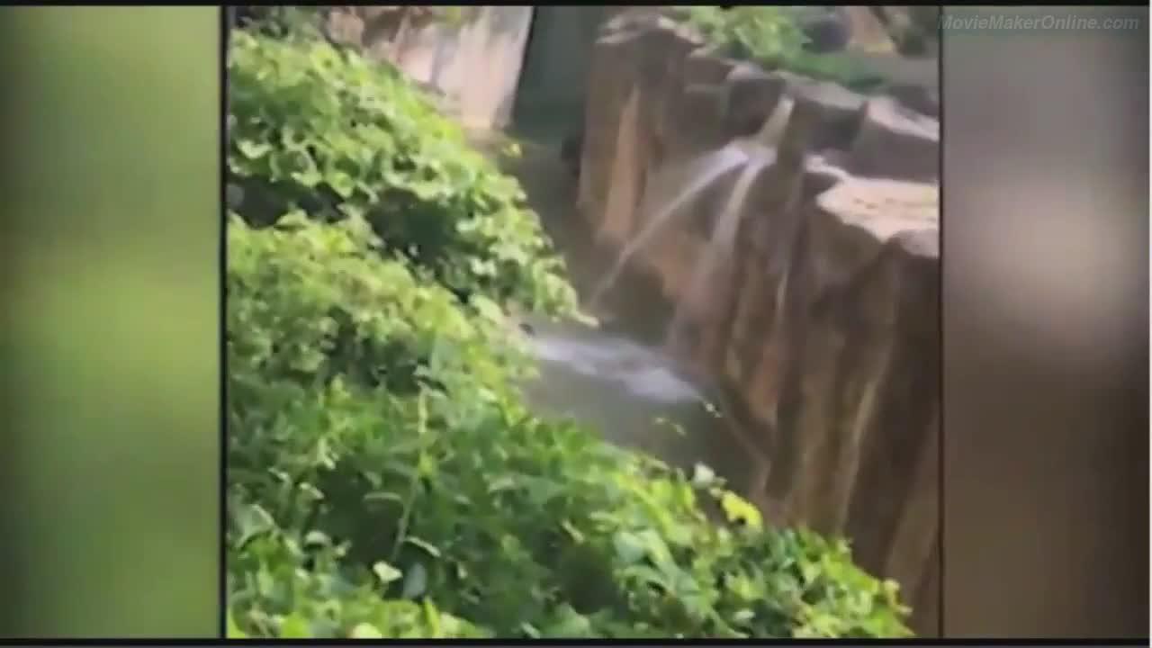Дете падна при горилите в зоопарк в САЩ