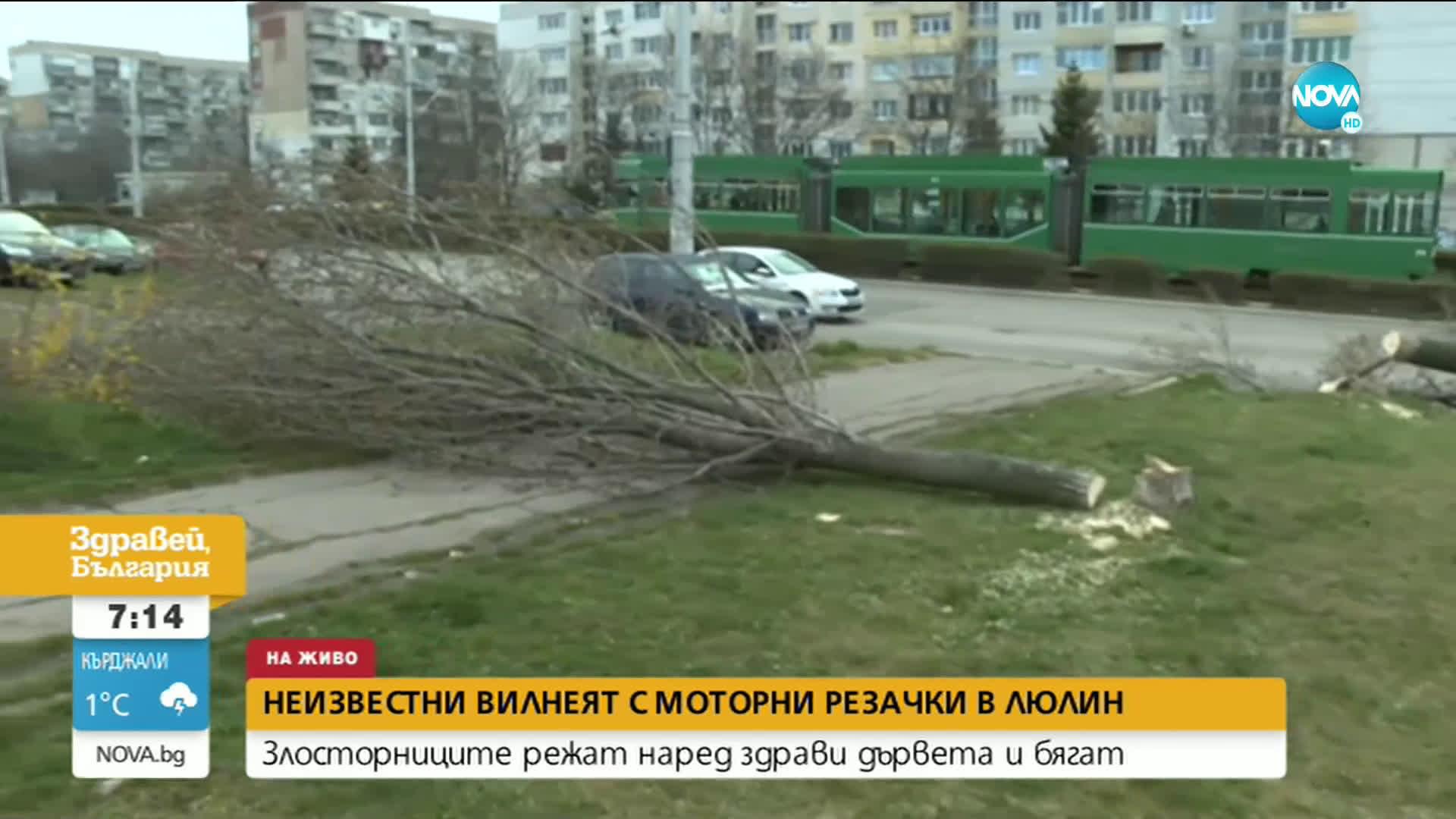"""Злосторници режат наред здрави дървета в """"Люлин"""" и бягат"""