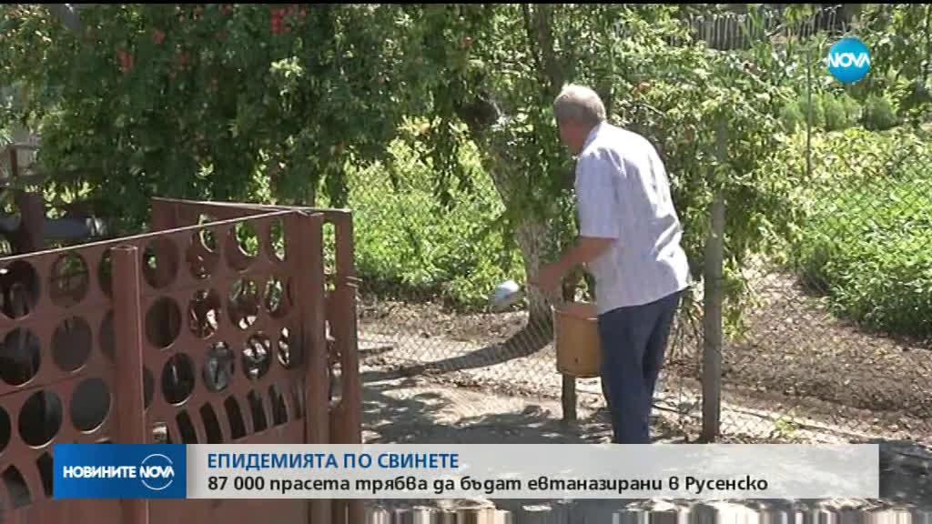 87 000 прасета трябва да бъдат евтаназирани в Русенско