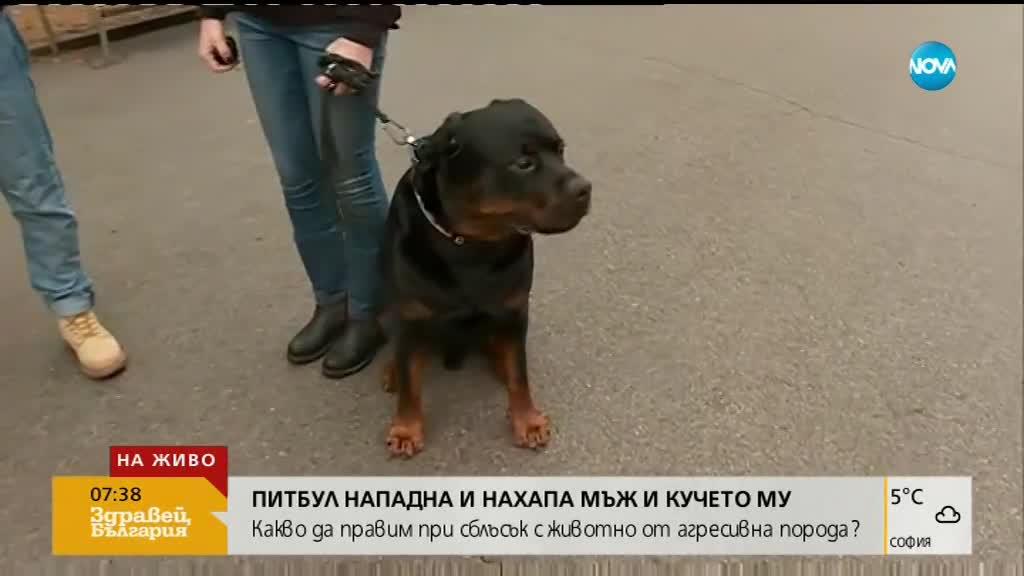 Насъскан питбул нахапа човек и кучето му