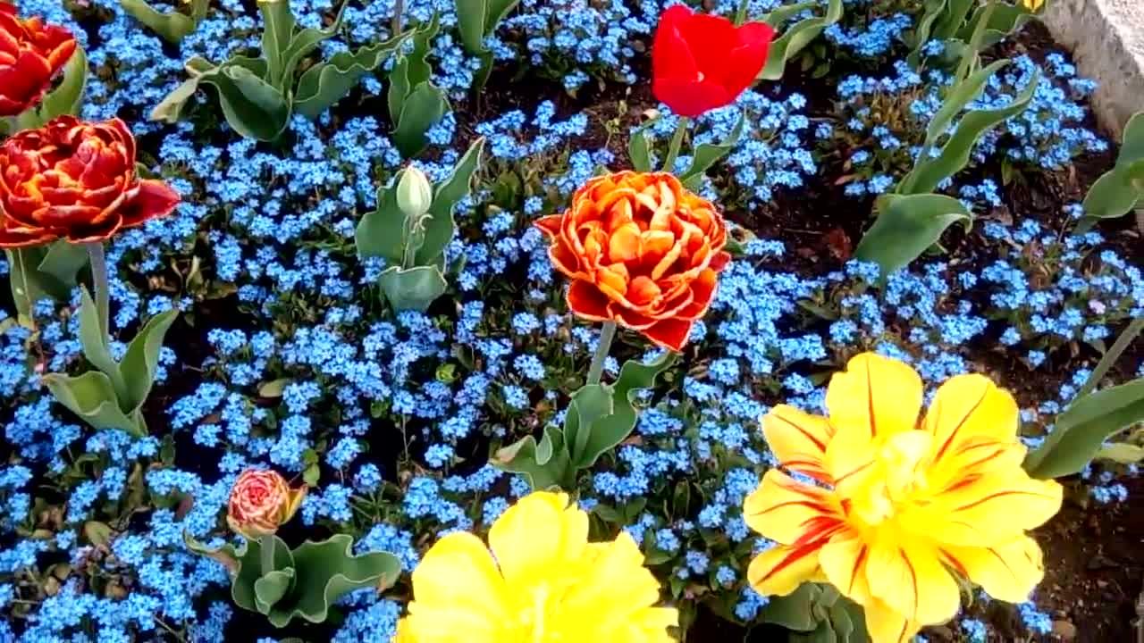 Невероятни кадри, които ни показват, че пролетта вече е при нас