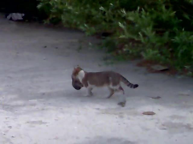 Интересно.котка Пренася Малкото Си
