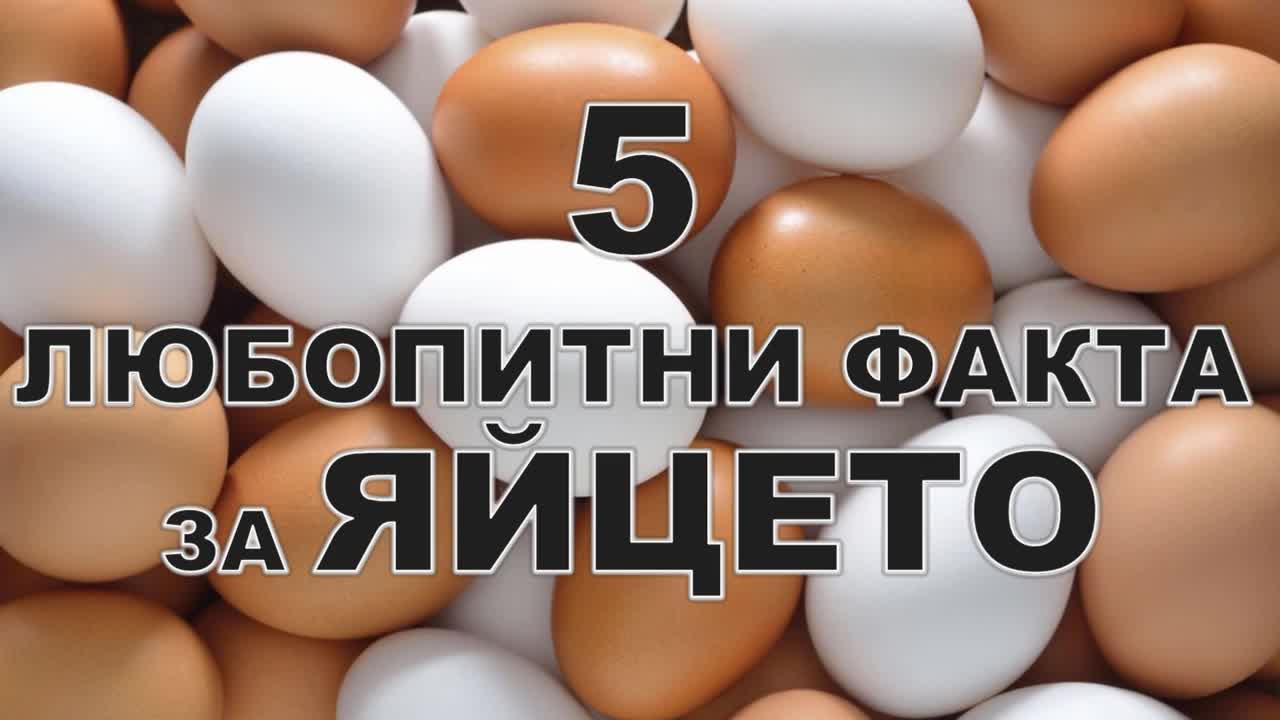 5 любопитни факта за яйцето