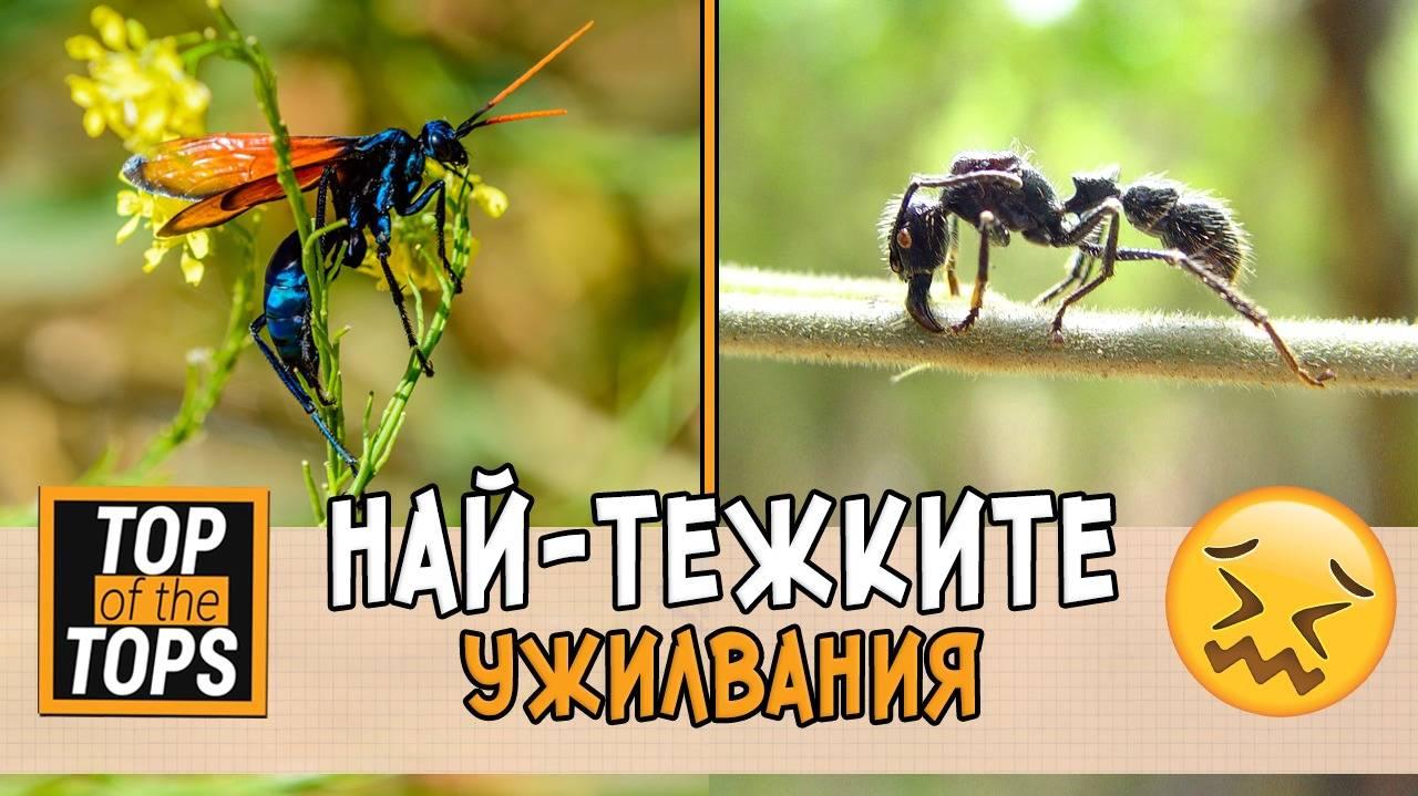 Най-болезнените ужилвания от насекоми