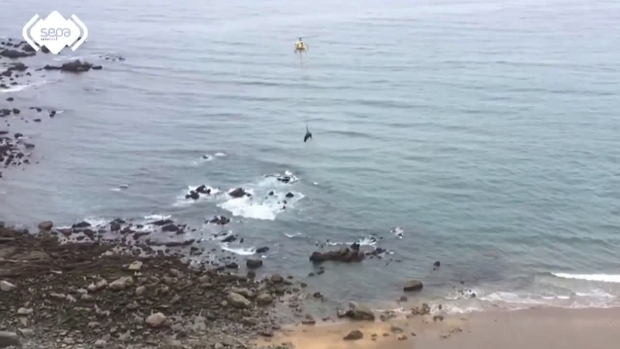 Spain: Helicopter rescues 1,000 kg bull after it fell off a cliff