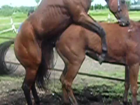 Секс с коне порно