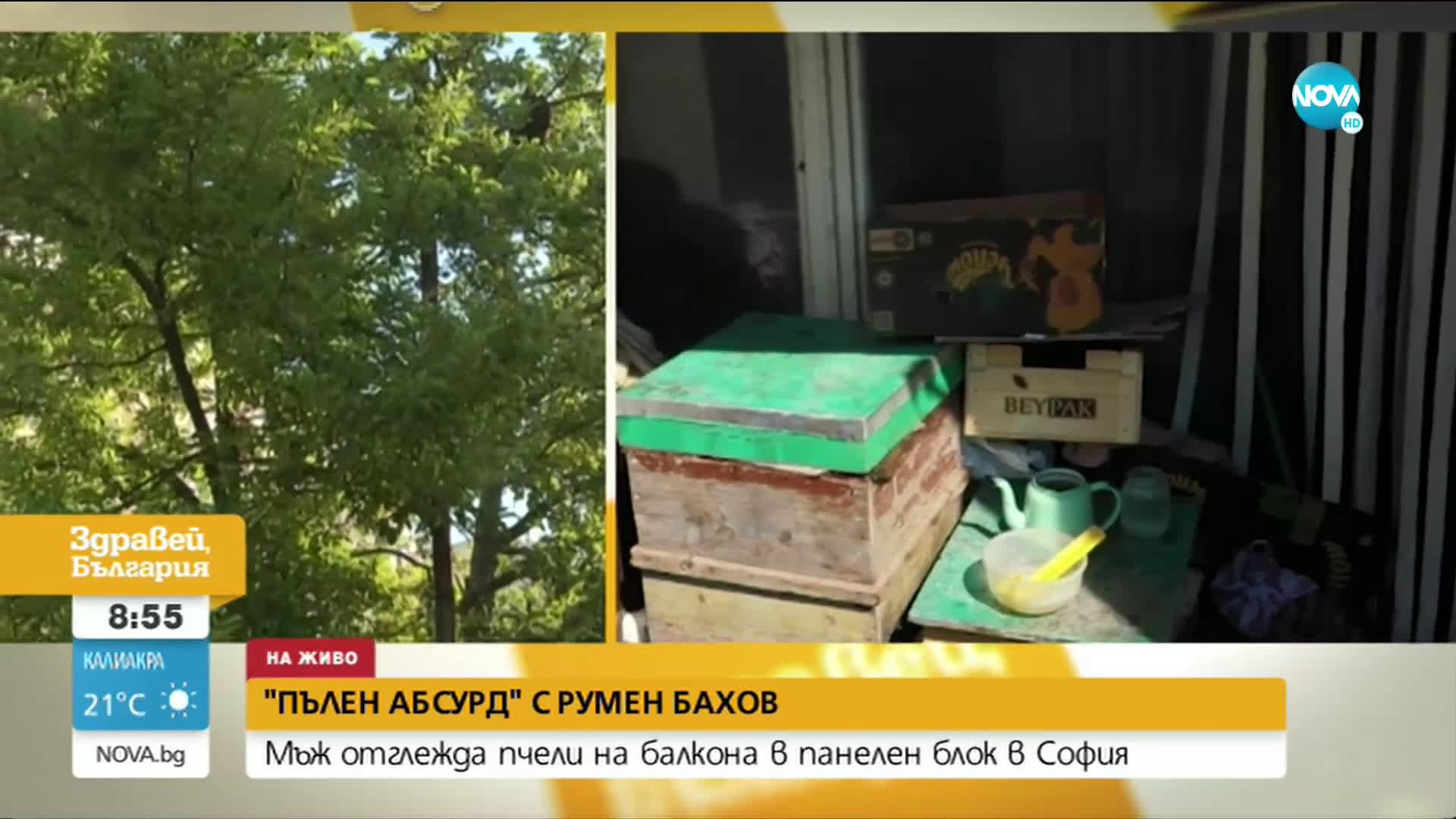 """""""ПЪЛЕН АБСУРД"""": Мъж отглежда кошери на балкона си в София"""