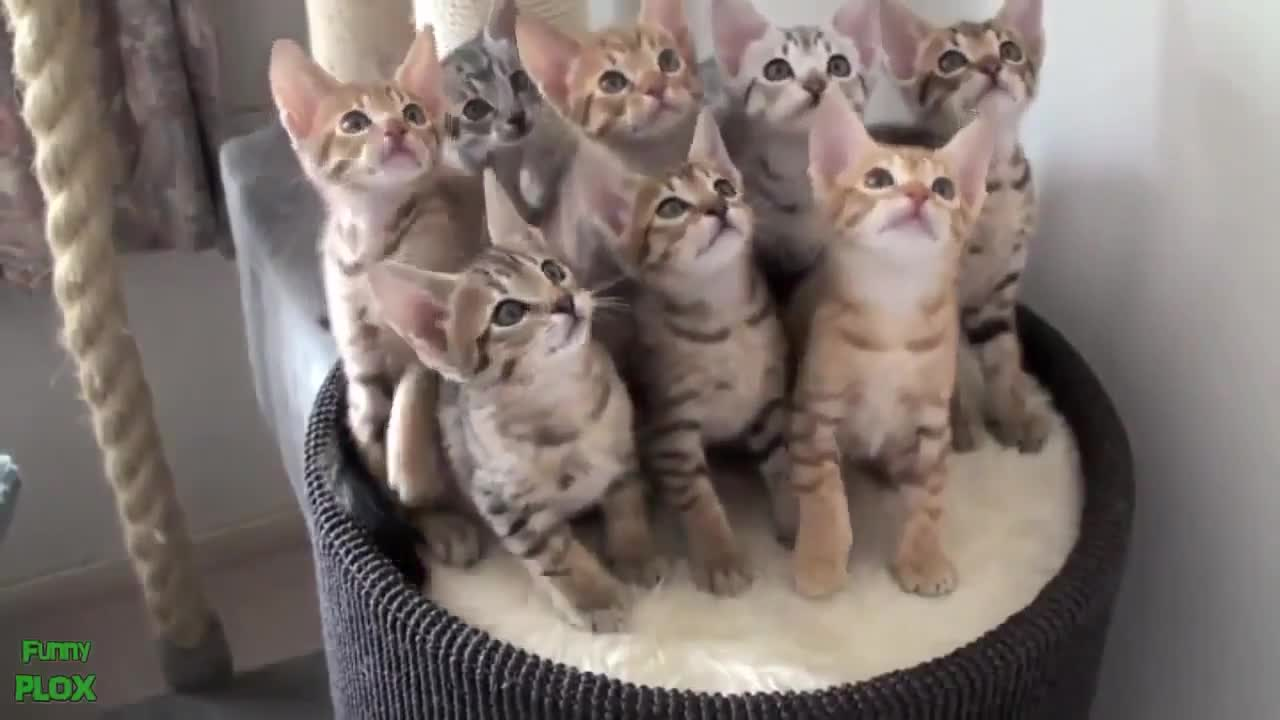 Резултат с изображение за смешни котки вбокс