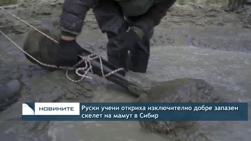 Руски учени откриха изключително добре запазен скелет на мамут в Сибир