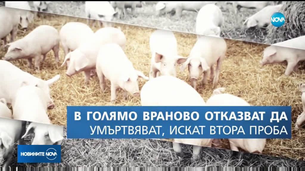 Сигнал за болно прасе от африканска чума във Видин