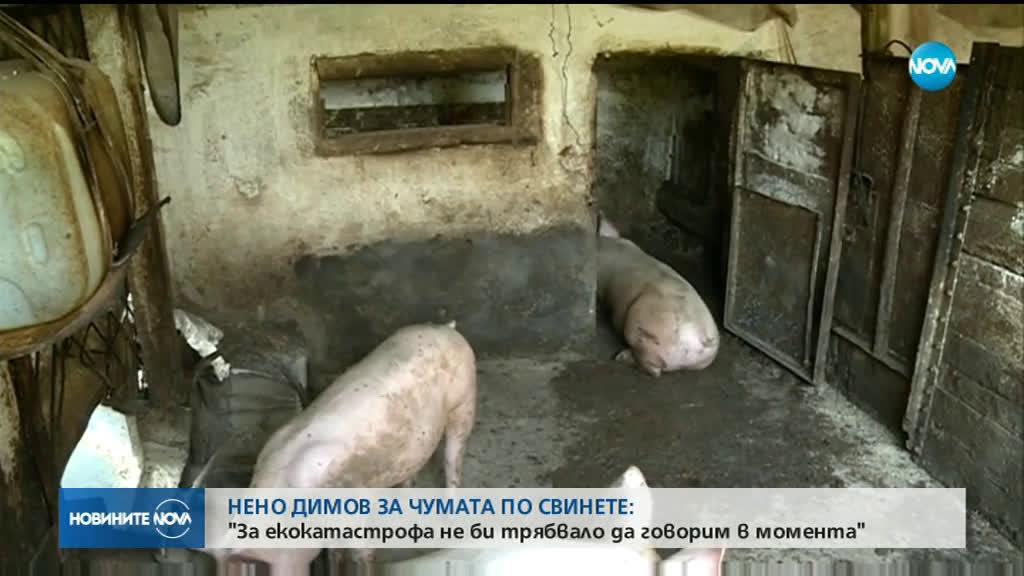 Заплашва ли чумата по свинете с екокатастрофа?
