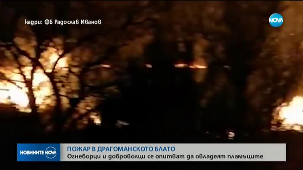 Пожар гори в Драгоманското блато