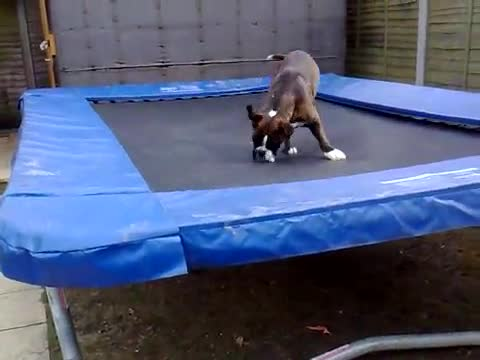 Куче и батут- хи-хи