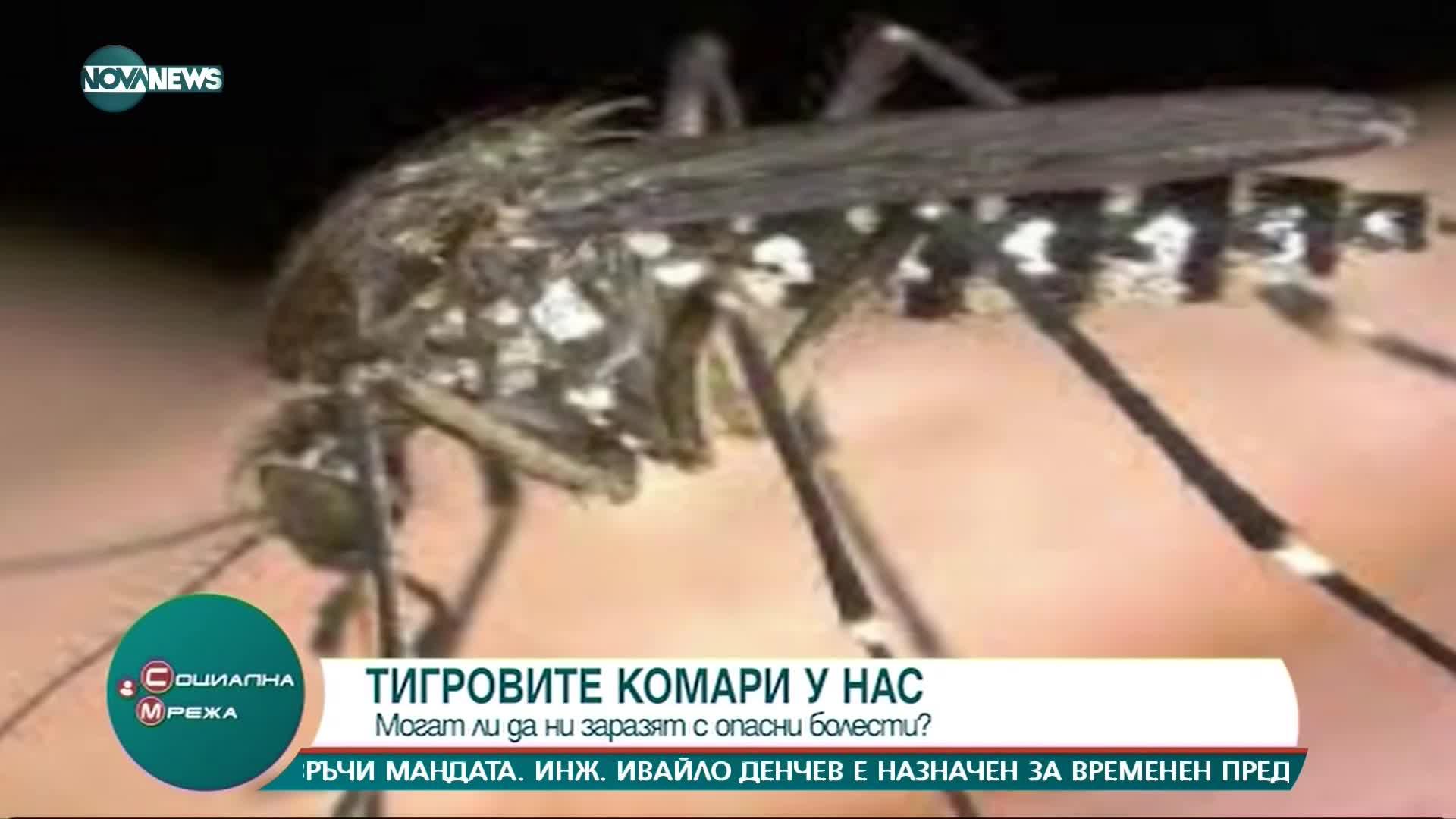 """""""Социална мрежа"""": Могат ли комарите да ни заразят с опасни болести"""