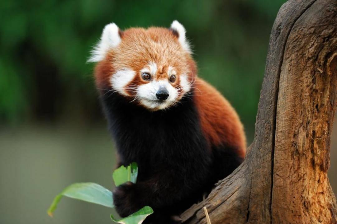 Топ 5 най-странни животни