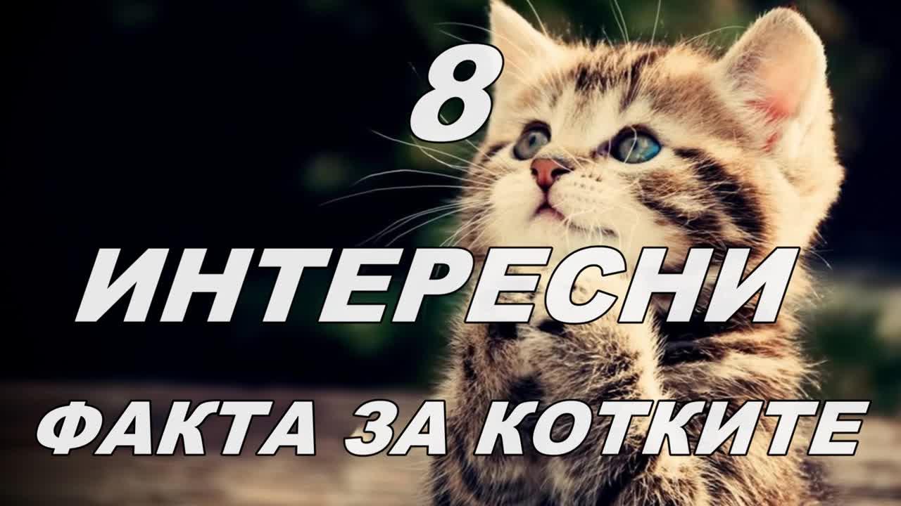 8 интересни фактa за котките