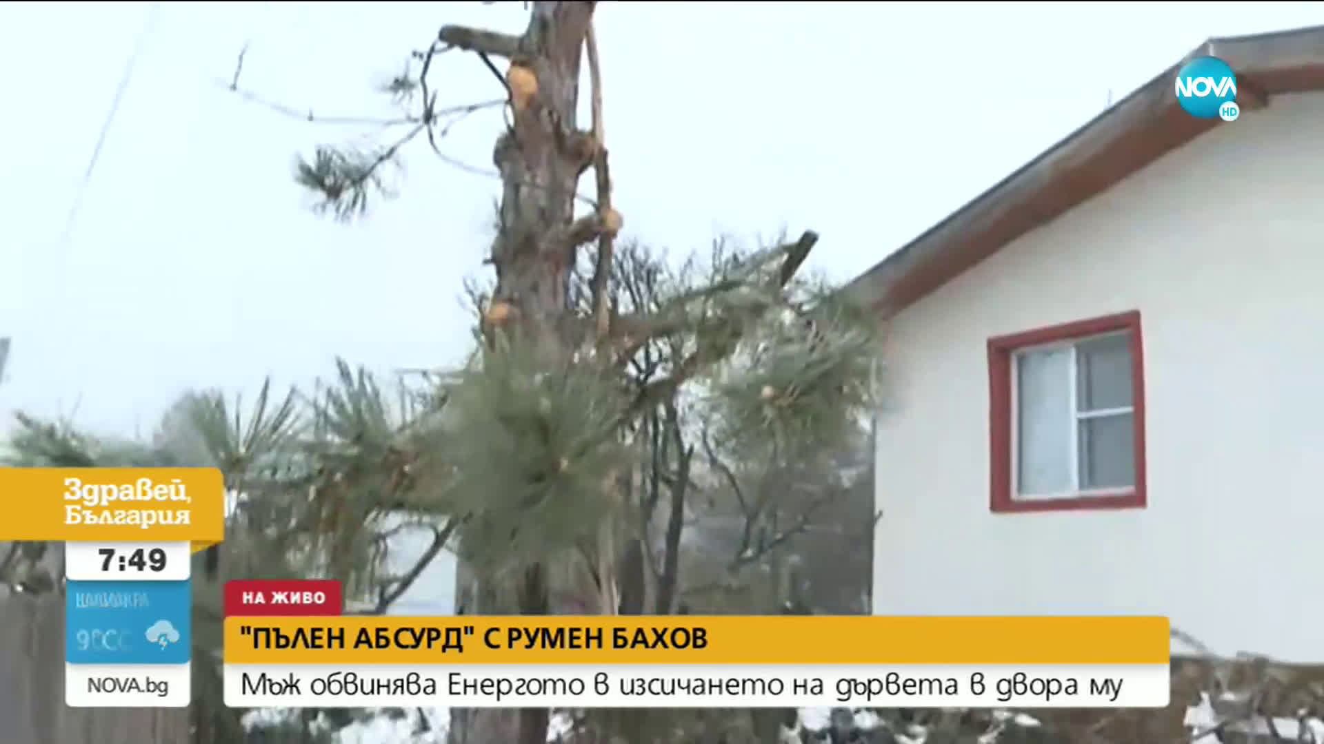 Мъж обвинява енергото в изсичането на дръвчета в двора му