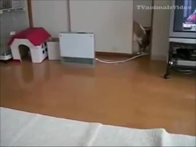 картинки собака смешная