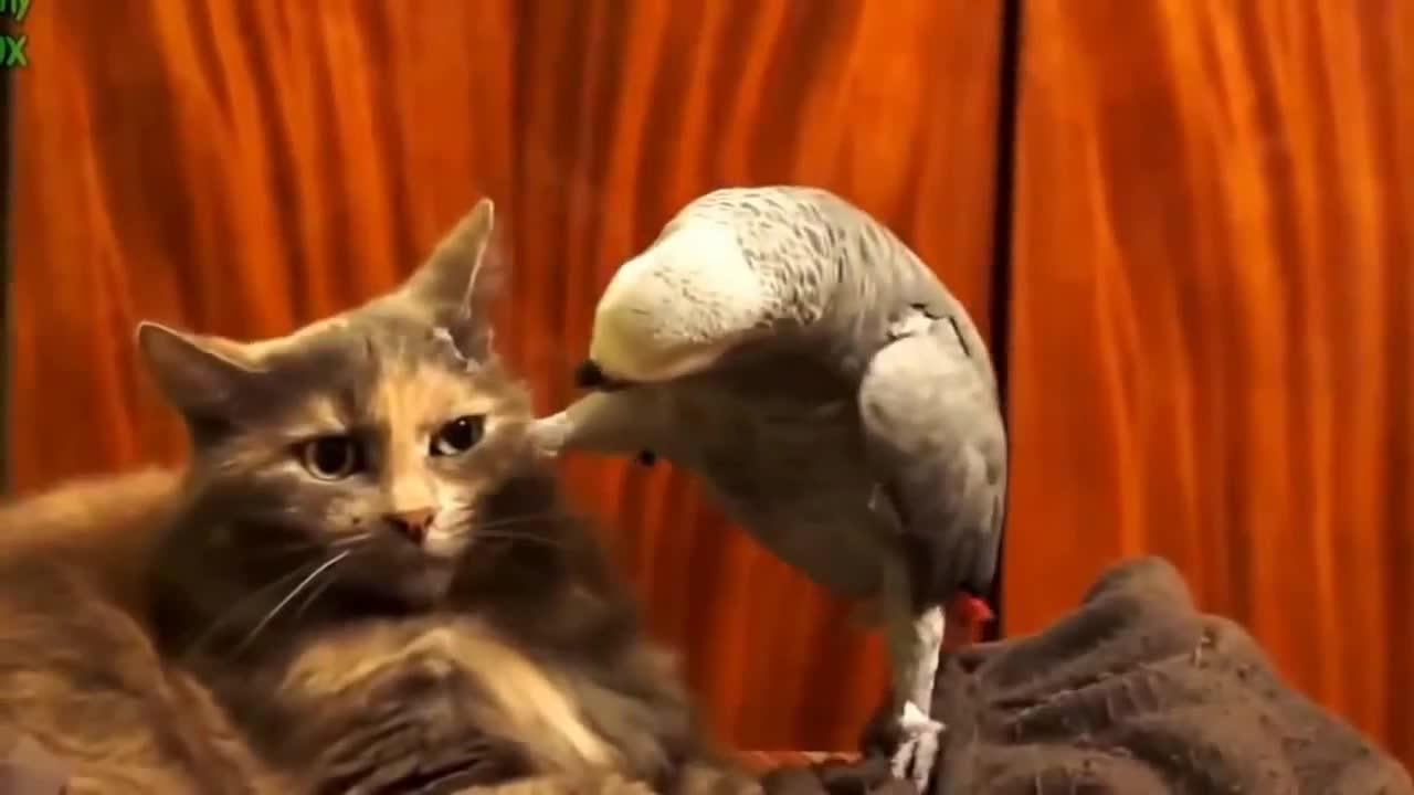 Резултат с изображение за котки,кучета папагали