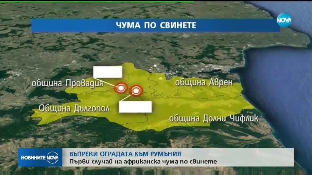 Огнище на афиканска чума при домашни свине е потвърдено в България
