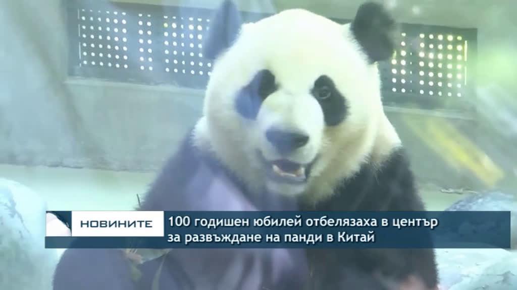 100 годишен юбилей отбелязаха в център за развъждане на панди в Китай